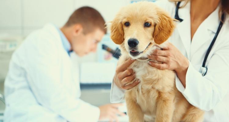 Sensorspender für Tierarztpraxis