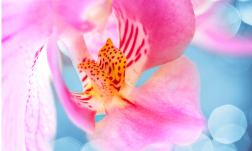 Schranksysteme Digitaldruck Motiv Orchidee von Infratronic Solutiuons